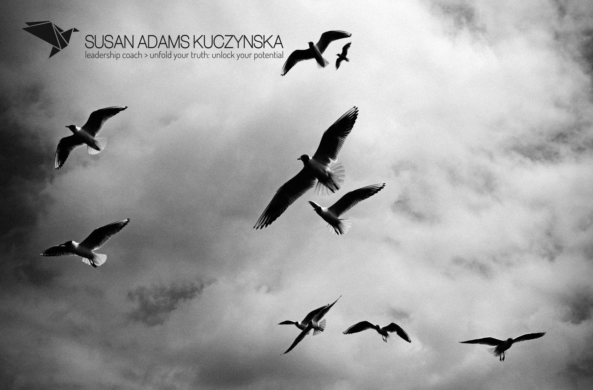 Birds flying in cloudy sky with SAK logo